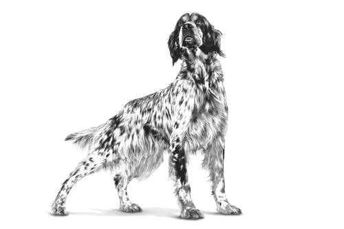 royal-canin-veterinary-diet-high-fiber-gastrointestinal