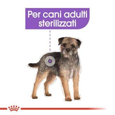 royal_canin_sterilised