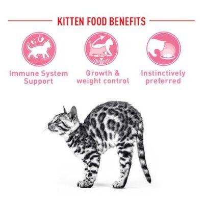 base-royal-canin-sterilised-kitten