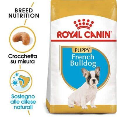bulldog_francese_cucciolo