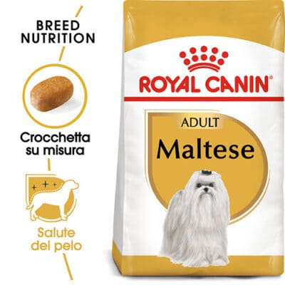 cane_maltese_adulto
