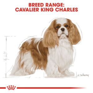 cavalier_king