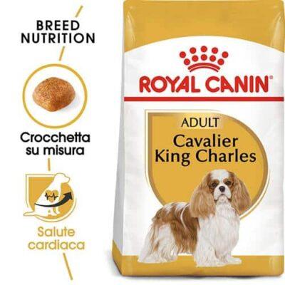 cavalier_king_charles_spaniel_adults