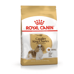 cavalier_king_sacco
