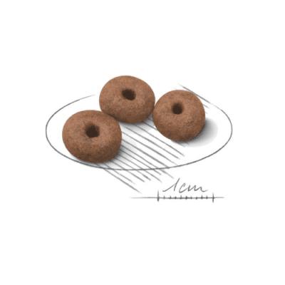 crocchette_starter