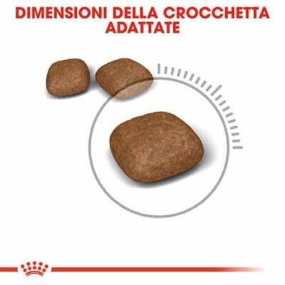 crocchette_urinary_gatto