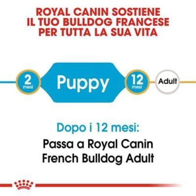 cuccioli_di_bulldog_francese
