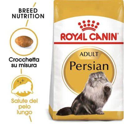 gatto_persiano