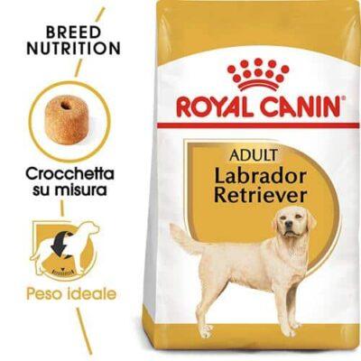 labrador_royal_canin