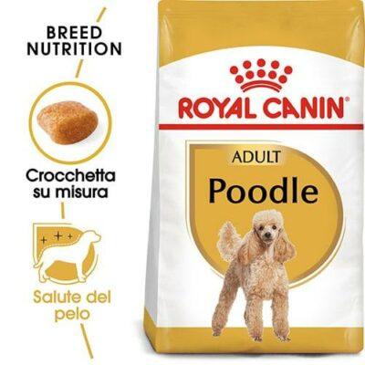 poodle_cane