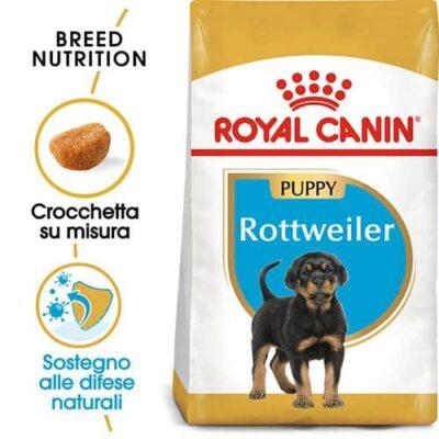 rottweiler_royal