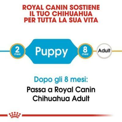 royal_canin_chihuahua