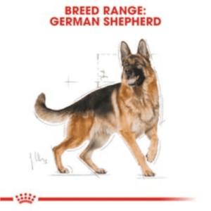 royal_canin_german_shepherd