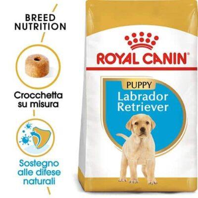 royal_canin_junior_labrador
