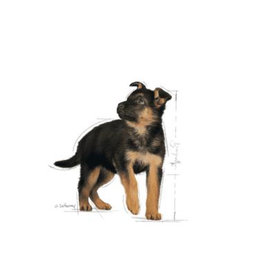 royal_canin_maxi_junior