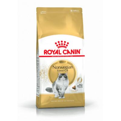 royal_canin_norvegese