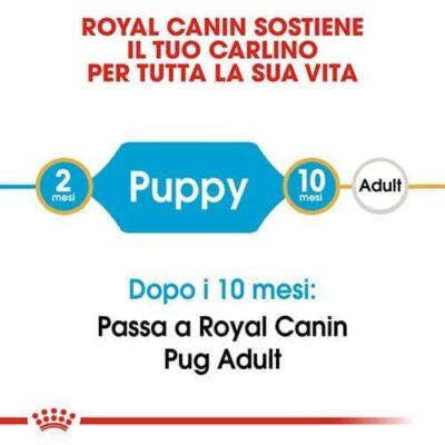 royal_canin_pug