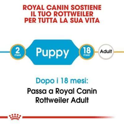 royal_canin_rottweiler_junior