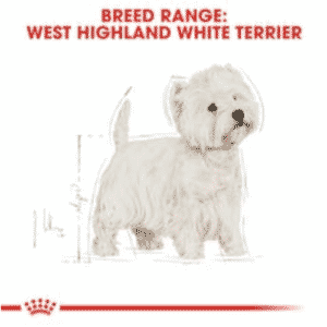 royal_canin_west_highland_white_terrier