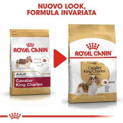 royal_king_cane