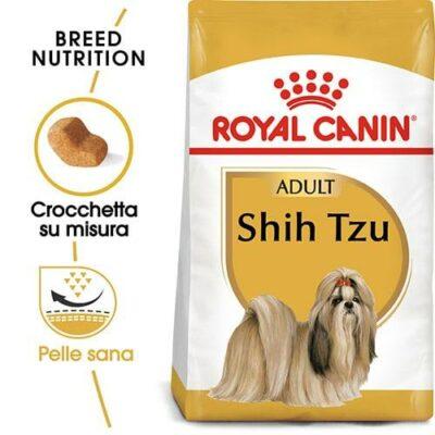 shih_tzu