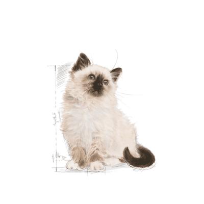 royal-canin-kitten-gattino