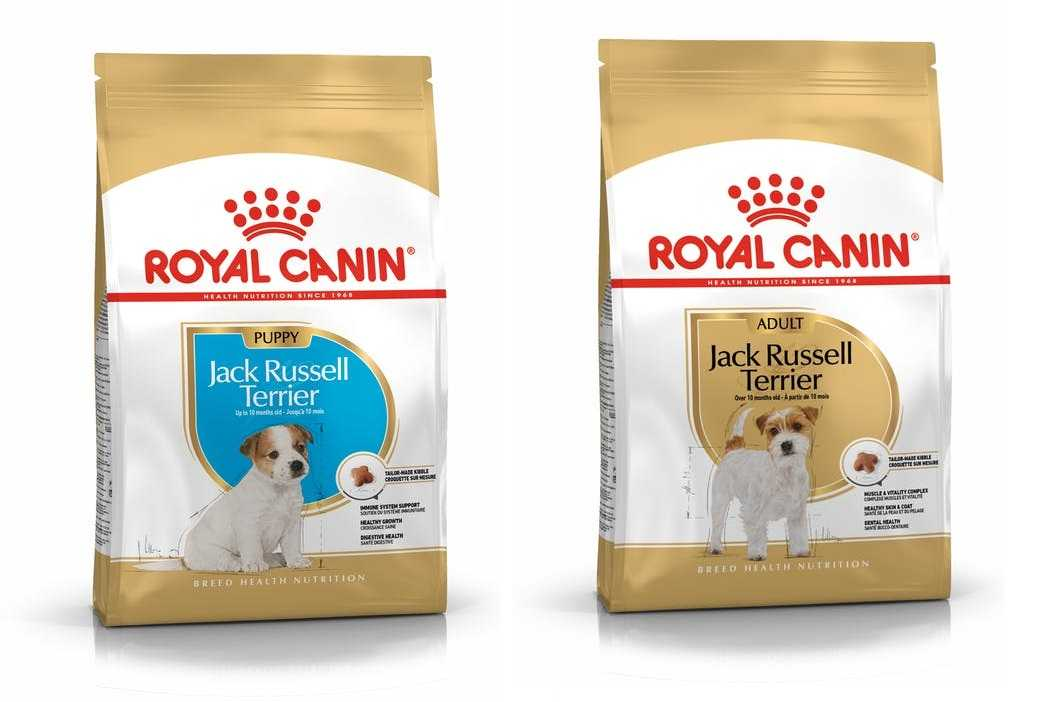 jack-russel-adult-puppy-royal-canin-cibo-cani